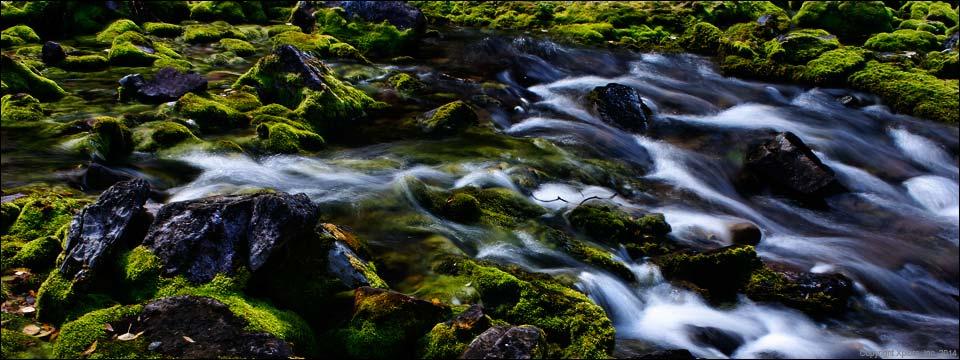 water over moss jpg